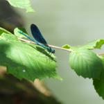 Alpe della Luna 12 - libellula