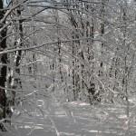 Alpe della Luna 19 - neve