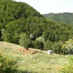 Casentino 1854