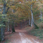 Parco Monte Cucco_190