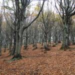 Parco Monte Cucco_234